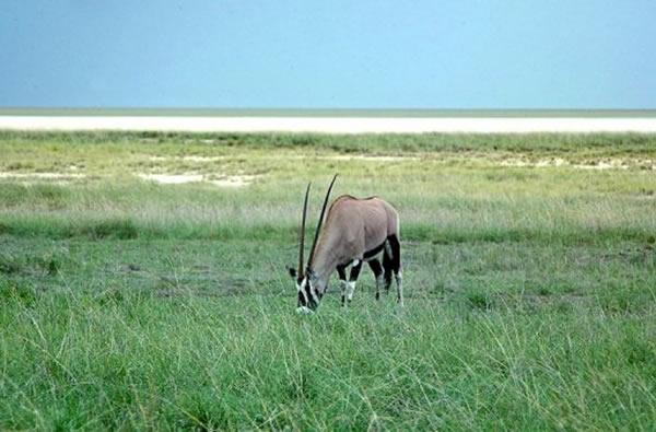 纳米比亚国家森林公园惊现地球最早动物化石(