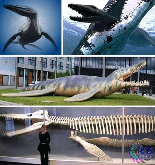 十四种怪异的灭绝动物:旋齿鲨如同巨型绞肉机(组图)