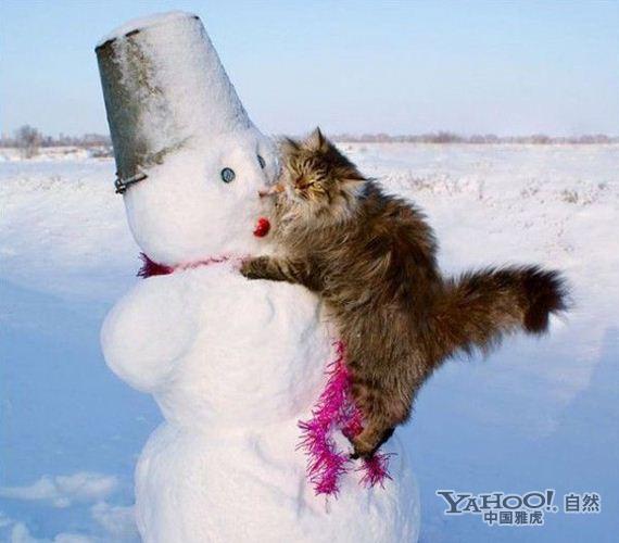 动物趣图:雪中撒欢的猫咪