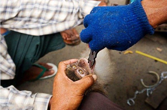 亚洲情色动物与人_黑镜头揭秘亚洲野生动物贸易链黑熊胆卖2至4美元(组图)-搜狐滚动