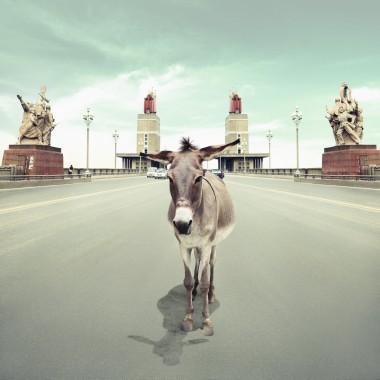 艺术 左小祖咒/左小祖咒艺术作品《小驴面壁》...