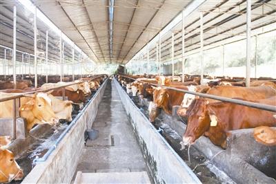 新型养牛场设计图纸