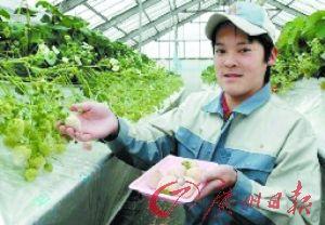 """左图是名为""""阿苏的小雪""""的白色草莓。右图是培育出这种草莓的中学生。"""