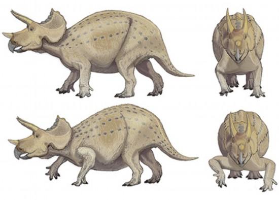 日本科学家用新方法解开恐龙如何站立的奥秘;; 三角龙站姿分析,上图更图片