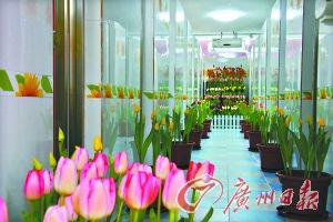 广州南沙五星级厕所 伴着郁金花香如厕