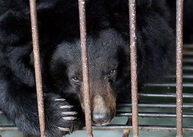 由北京爱它动物保护公益基金会工作人员送交中国