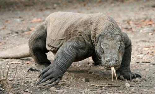 世界上最丑陋的动物(组图)