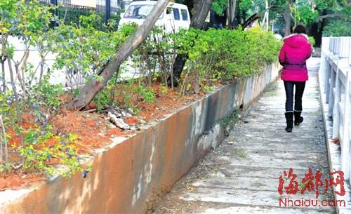 花圃缺护栏污泥流入步行道