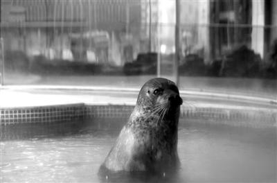 2月29日,长安大饭店,专家探视海豹欢欢后将要离开,欢欢突然探出头来向人群张望。