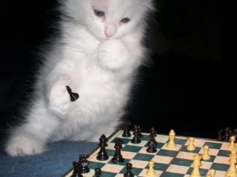 动物模仿人类 举止神态超搞笑(组图)