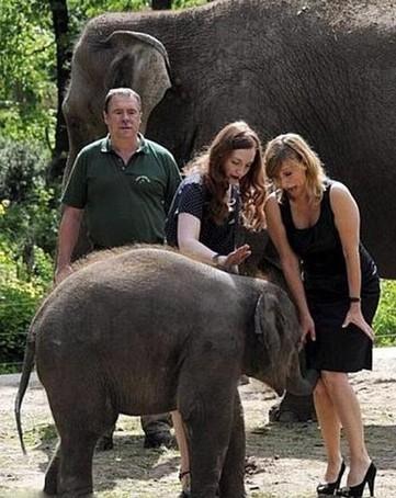大象调戏美女组图 竖