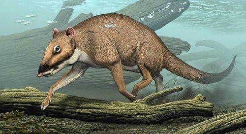 已灭绝的25种史前生物:伤齿龙恐龙中智商最高(1)_科技