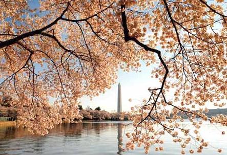 春季赏花哪里去?众信旅游为您盘点五大赏花胜地