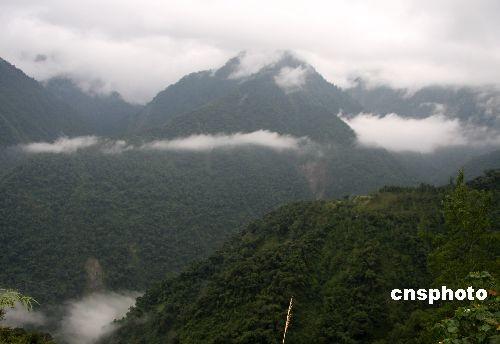 资料图:玉山森林公园为台湾著名风景区,图为森林公园云海。