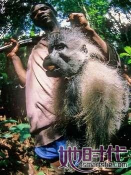 猎户将一窝大猩猩全部杀死.图片
