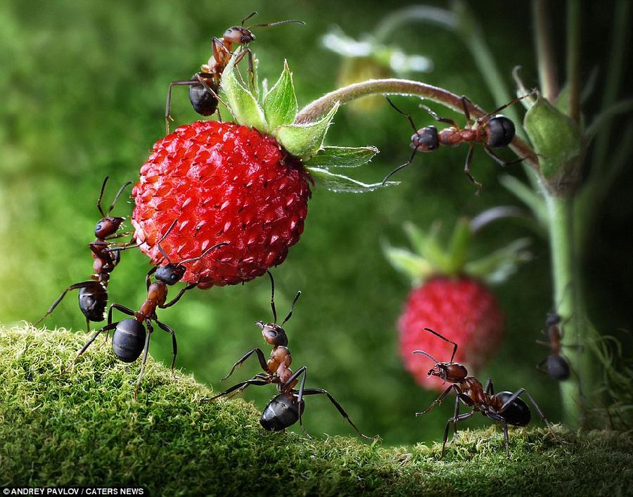 摄影师拍蚂蚁的微观生活 仿佛在童话世界(组图)