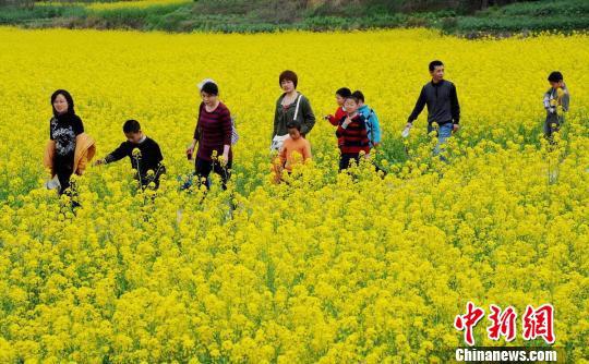 图为在江西省婺源县,金灿灿的油菜映衬着一张张惬意的笑脸。 卓忠伟 摄