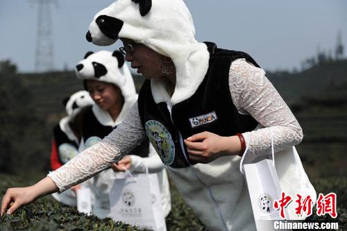 动物环保衣服图片大全