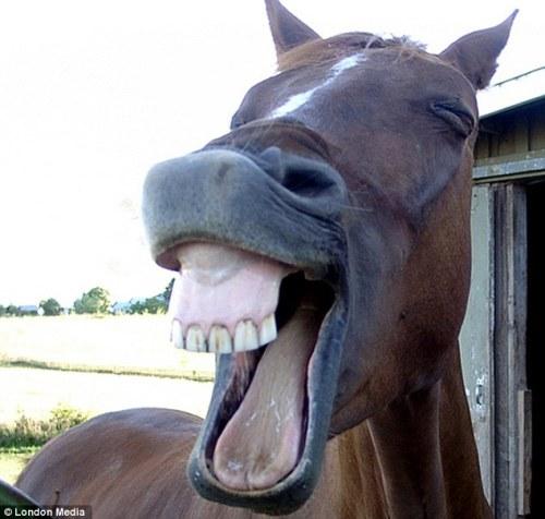 看了以下张开笑脸的动物们的照片,简直能让人笑翻.