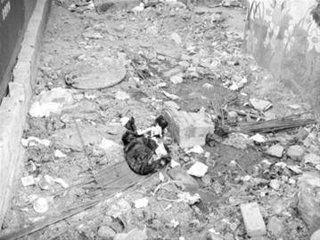 居民们认为,位于金地美林工地的化粪池管道被改动。