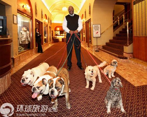 专人带宠物遛弯