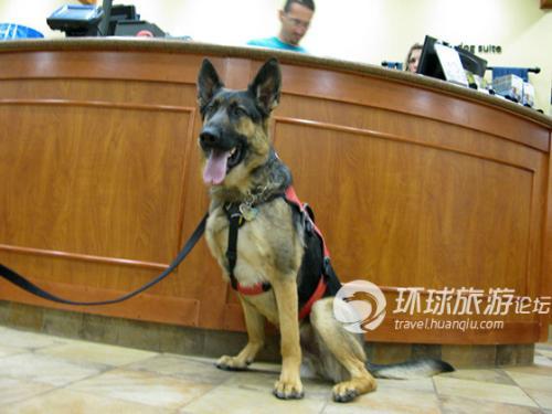 一个狗狗正在等主人check in