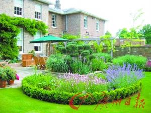 薰衣草是岭南花圃岛状花坛最常见的花卉之一.图片