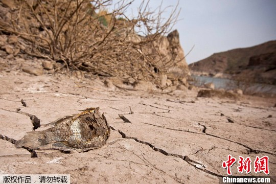 不遇旱灾 水库干涸鱼类死亡似化石