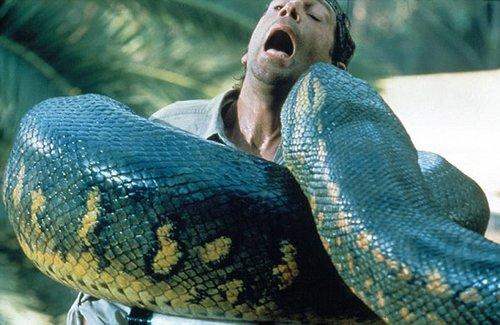 影片《狂蟒之灾》片段,泰坦巨蟒比这些蟒蛇还要大得多