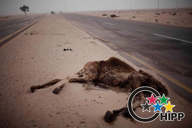 日常生活类新闻组图获奖照片:[银奖]中东利比亚缝隙