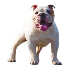 49个禁养犬种
