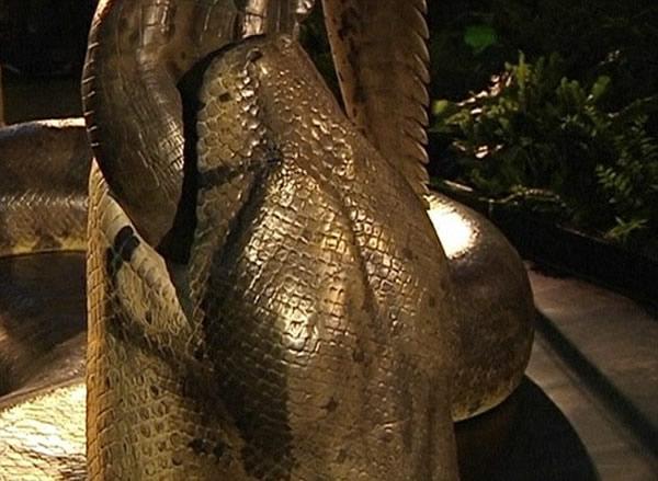 泰坦巨蟒称霸远古时代 体型超过一辆公交车(1)_科技频道_光明网(组图)