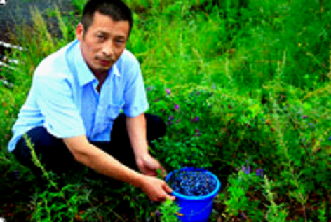 超越蓝莓老板鞠联合的博爱情怀(组图)