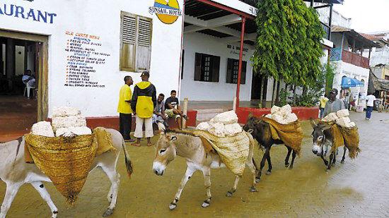 因为岛上货物运输基本靠驴,除了驴子就是靠人力拉的平板车.图片