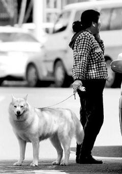 哈尔滨禁狗令-对人性的思考