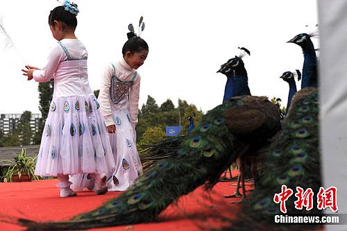 图为穿着孔雀服的小朋友与孔雀玩耍.中新社发 任东 摄