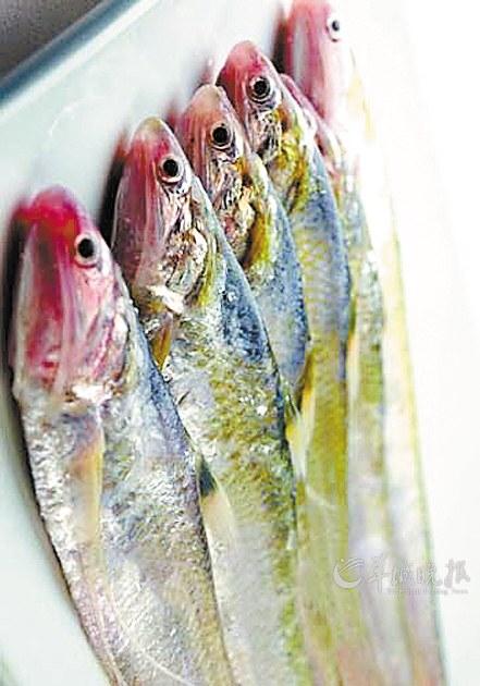 渔民在长江张家港乐余段辛苦劳动一天,只逮到两条各重4两左右的刀鱼 新华社发