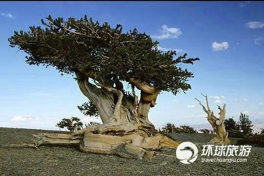 中国寿命最长的树_寿命最长的动物海龟