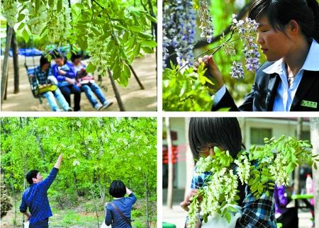 草莓/2012金鹭槐花草莓文化节4月21日盛大开幕
