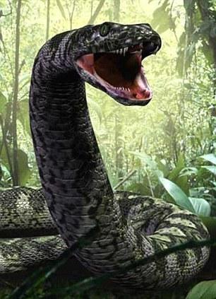化石重塑史前巨蟒:长14米体重相当小轿车(图)(1)_科技