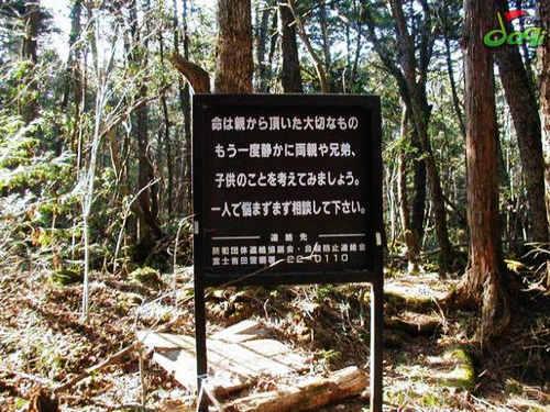 """阴森恐怖的日本""""自杀森林""""(组图)"""
