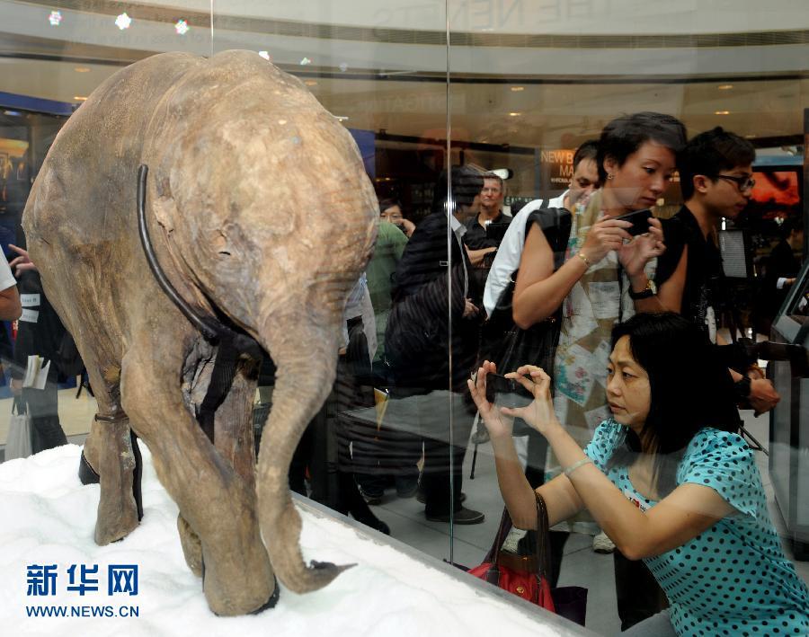 冰河时期长毛象宝宝首次在香港展出 国内