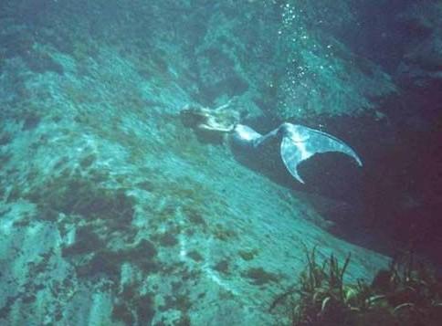 """史上最受争议的照片:""""深海人鱼""""居首社会中国"""