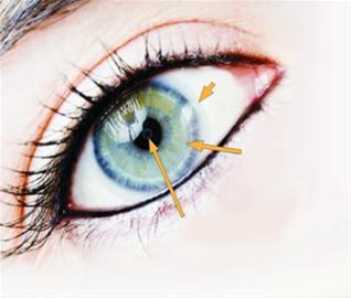 美研发高科技隐形眼镜将能接收远程数据信息
