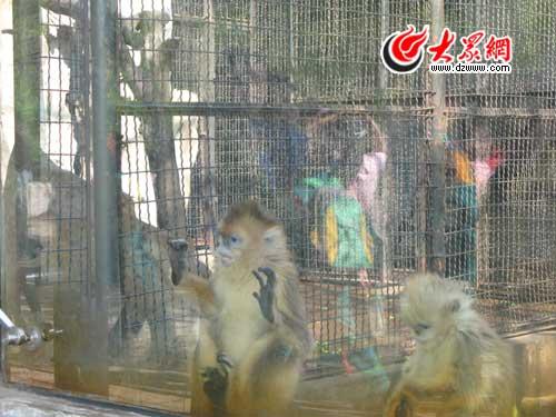 山师附小:春天里的动物园之旅(组图)