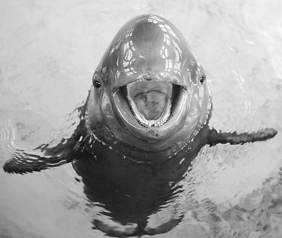 高宝燕 宝宝/跟海豚一样,江豚也有着一副天生的笑脸。但笑容背后,却藏着...