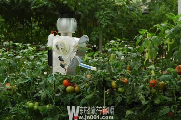 采摘机器人展示区-第十三届中国 寿光 国际蔬菜科技博览会开幕