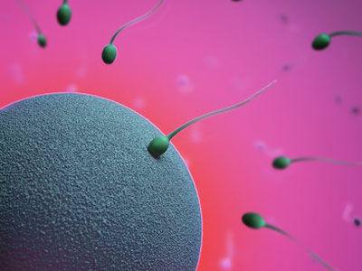 精子体内存活多久_精子在女人体内的存活时间有多久-搜狐女人