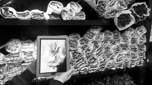 城市晚报讯 近日,记者长春圈楼内的一家花店看到,花店内摆满了各种各样的鲜花,与其他花店没有太大差别,不过,一位拿着ipad向顾客推荐花束的花艺师却吸引了记者的眼球。