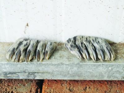 民警在店内厨房柜子里找到了厨师提到的两瓶海豹油,分别用矿泉水瓶图片